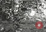 Image of Japanese-American soldiers moving into combat positions Bruyeres France, 1944, second 10 stock footage video 65675065592