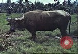 Image of native civilians Pacific Theater, 1944, second 3 stock footage video 65675065672