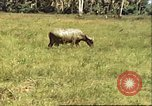Image of native village Pacific Theater, 1944, second 3 stock footage video 65675065674