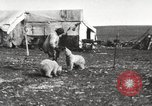 Image of polar cubs Banks Island Canada, 1914, second 12 stock footage video 65675065853