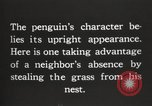 Image of penguins nesting South Georgia USA, 1921, second 8 stock footage video 65675065863