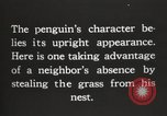 Image of penguins nesting South Georgia USA, 1921, second 10 stock footage video 65675065863