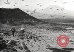 Image of birds on Ascension Island Ascension Island, 1922, second 5 stock footage video 65675065872