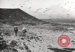 Image of birds on Ascension Island Ascension Island, 1922, second 6 stock footage video 65675065872