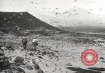 Image of birds on Ascension Island Ascension Island, 1922, second 7 stock footage video 65675065872