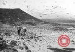 Image of birds on Ascension Island Ascension Island, 1922, second 8 stock footage video 65675065872