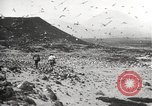 Image of birds on Ascension Island Ascension Island, 1922, second 9 stock footage video 65675065872