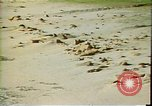 Image of beach Maui Hawaii United States USA, 1978, second 4 stock footage video 65675065942