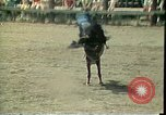 Image of rodeo Colorado United States USA, 1978, second 7 stock footage video 65675065946