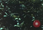 Image of individual camouflage United States USA, 1967, second 4 stock footage video 65675065978