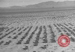 Image of American tanks California United States USA, 1943, second 12 stock footage video 65675066014