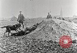 Image of German Red Cross dogs France, 1916, second 11 stock footage video 65675066059