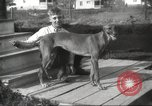 Image of greyhounds United States USA, 1925, second 2 stock footage video 65675066126