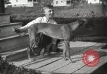 Image of greyhounds United States USA, 1925, second 3 stock footage video 65675066126