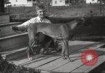 Image of greyhounds United States USA, 1925, second 4 stock footage video 65675066126