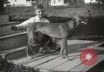 Image of greyhounds United States USA, 1925, second 5 stock footage video 65675066126
