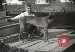 Image of greyhounds United States USA, 1925, second 6 stock footage video 65675066126