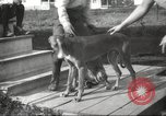 Image of greyhounds United States USA, 1925, second 7 stock footage video 65675066126