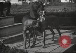 Image of greyhounds United States USA, 1925, second 10 stock footage video 65675066126