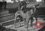 Image of greyhounds United States USA, 1925, second 12 stock footage video 65675066126