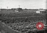 Image of Ford Thrift Gardens Inkster Michigan USA, 1932, second 4 stock footage video 65675066175