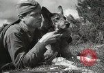 Image of Red Army field communication maneuvers Soviet Union, 1940, second 4 stock footage video 65675066222