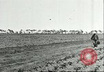 Image of soybean cultivation Harbin Manchukuo Manchuria China, 1928, second 11 stock footage video 65675066282