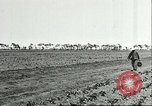 Image of soybean cultivation Harbin Manchukuo Manchuria China, 1928, second 12 stock footage video 65675066282
