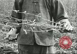 Image of soybean cultivation Harbin Manchukuo Manchuria China, 1928, second 10 stock footage video 65675066284