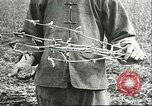 Image of soybean cultivation Harbin Manchukuo Manchuria China, 1928, second 11 stock footage video 65675066284