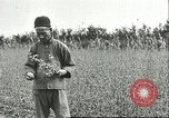 Image of soybean cultivation Harbin Manchukuo Manchuria China, 1928, second 12 stock footage video 65675066284