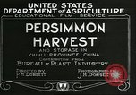 Image of persimmon orchards Chihli China, 1928, second 5 stock footage video 65675066287