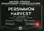 Image of persimmon orchards Chihli China, 1928, second 6 stock footage video 65675066287