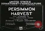 Image of persimmon orchards Chihli China, 1928, second 8 stock footage video 65675066287