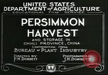 Image of persimmon orchards Chihli China, 1928, second 11 stock footage video 65675066287