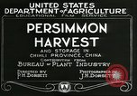 Image of persimmon orchards Chihli China, 1928, second 12 stock footage video 65675066287