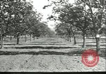 Image of persimmon orchards Chihli China, 1928, second 10 stock footage video 65675066288