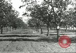 Image of persimmon orchards Chihli China, 1928, second 12 stock footage video 65675066288