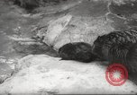 Image of beavers Zurich Switzerland, 1958, second 7 stock footage video 65675066502