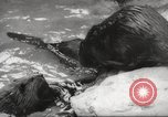 Image of beavers Zurich Switzerland, 1958, second 11 stock footage video 65675066502