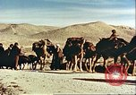 Image of agriculture Afghanistan, 1982, second 2 stock footage video 65675066734