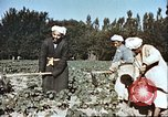 Image of agriculture Afghanistan, 1982, second 7 stock footage video 65675066738