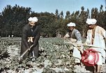 Image of agriculture Afghanistan, 1982, second 8 stock footage video 65675066738