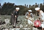Image of agriculture Afghanistan, 1982, second 9 stock footage video 65675066738