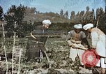 Image of agriculture Afghanistan, 1982, second 10 stock footage video 65675066738