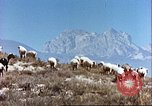 Image of sheep rearing Afghanistan, 1982, second 5 stock footage video 65675066739