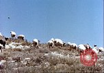 Image of sheep rearing Afghanistan, 1982, second 6 stock footage video 65675066739