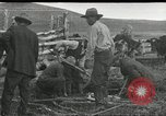 Image of cattle branding United States USA, 1918, second 1 stock footage video 65675066753
