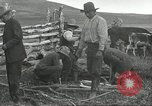 Image of cattle branding United States USA, 1918, second 5 stock footage video 65675066753