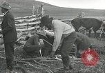 Image of cattle branding United States USA, 1918, second 7 stock footage video 65675066753